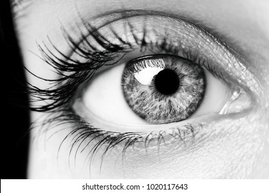 A beautiful insightful look woman's eye. Close up
