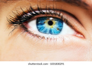 A beautiful insightful look woman's eye. Close up