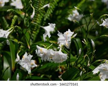 Beautiful Iris in the garden.