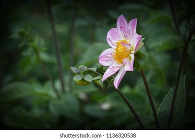beautiful isolated flower blossom