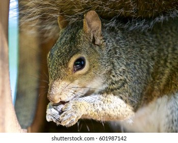 Beautiful isolated photo of a funny cute squirrel