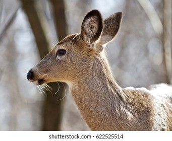 Beautiful isolated photo of wild deer in the forest