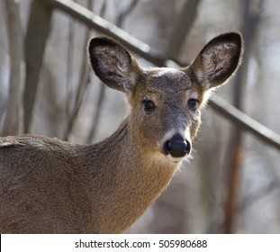 Beautiful isolated picture with a wild deer in the forest