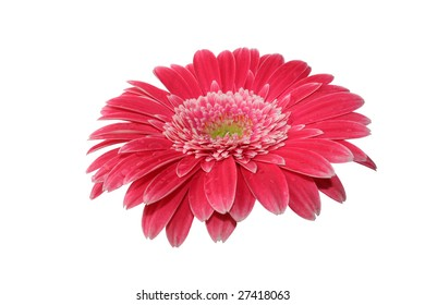 beautiful isolated pink gerbera flower, isolated on white background, ideal for natural,health or season designs.
