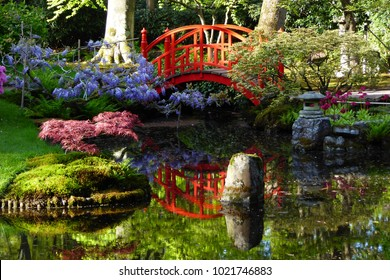 The beautiful Japanese garden at Den Haag, Holland, in de spring. The lovely redbridge reflecting in the water, surrounded bij acer, wisteria and azalea and a stone in the lake and temple
