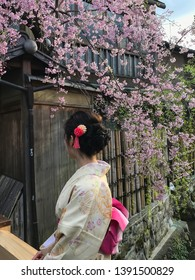 Beautiful Japanese girl wearing a kimono showing her  hair in an updo, sitting by a sakura tree, or cherry blossoms in Gion, the Geisha district in Kyoto, Japan