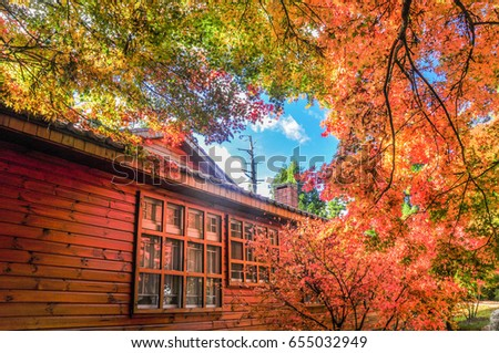 Beautiful Japanese Wooden House and Maple Red Leaves at Fushoushan Taichung Taiwan & Beautiful Japanese Wooden House Maple Red Stock Photo (Edit Now ...