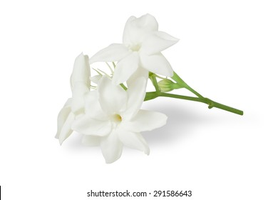 Beautiful Jasmine flower isolated on White Background