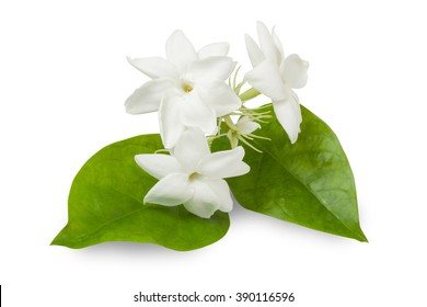 Beautiful Jasmine Flower isolated on white with clipping path
