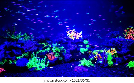Beautiful jellyfish, medusa in the neon light with the fishes. Aquarium with blue jellyfish and lots of fish. Making an aquarium with corrals and ocean wildlife. Underwater life in ocean
