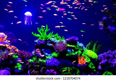 Beautiful jellyfish, medusa in the neon light with the fishes. Aquarium with blue jellyfish and lots of fish. Making an aquarium with corrals and ocean wildlife. Underwater life in ocean jellyfish.