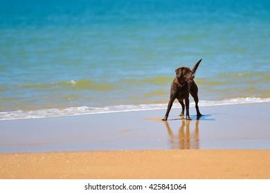 Beautiful joyful dog on the sandy beach sunny day background