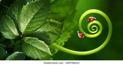 Beautiful juicy leaves, curl plants, two ladybirds macro glows in sun on dark green saturated background outdoors. Wallpaper - artistic image of purity and fragility of nature, wide format.