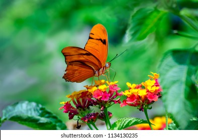 A beautiful Julia butterfly in a pretty garden with colorful flowers
