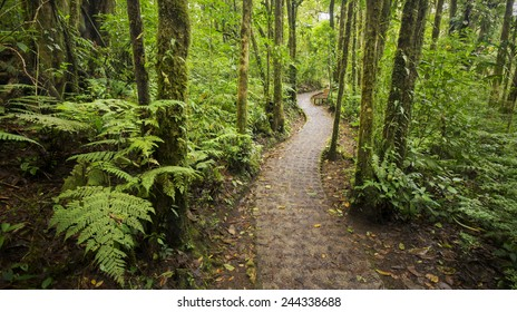 A beautiful jungle footpath from within the dense Costa Rican rain-forest.