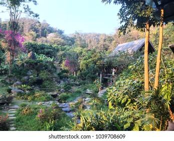 Beautiful jungle at Mae Kham Pong in Thailand