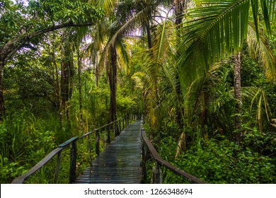 Beautiful jungle path