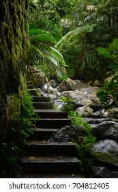 Beautiful jungle path in the El Yunque national forest in Puerto Rico