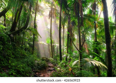 Beautiful jungle path through the El Yunque national forest in Puerto Rico