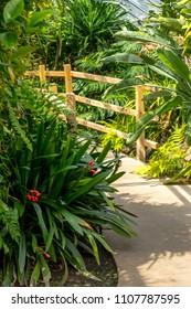 Beautiful, jungle plants and a wooden bridge background