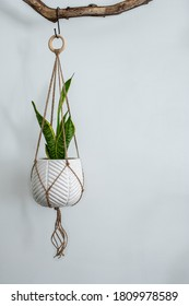 A beautiful jute twine macrame plant hanger is hanging from a driftwood branch. A white ceramic pot is holding a snake plant.
