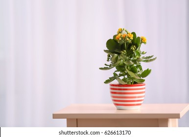 Beautiful kalanchoe plant in pot on table