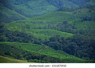 """'Beautiful Kannan Devan Tea hills of Munnar, Kerala, South India"""""""