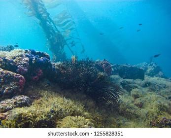 A beautiful kelp forest