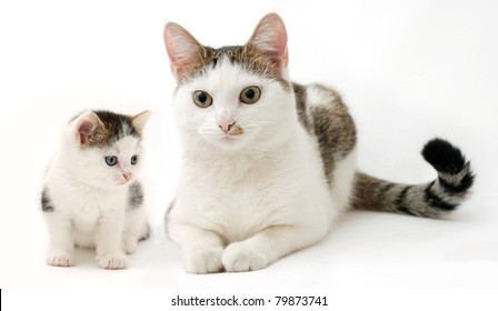 Beautiful kitten and a lady-cat on the white background (the same cat at the different periods of life)