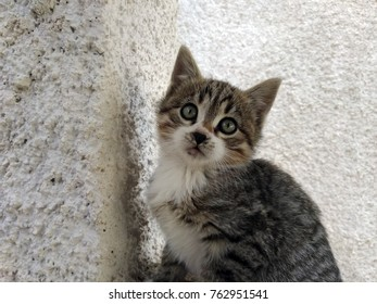 Beautiful kitten looking sad