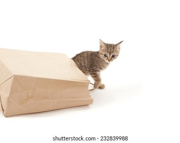 Beautiful kitten playing with paper isolated on white