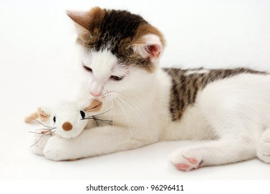Beautiful kitten playing with plush mouse on the white background