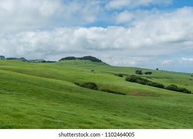 Beautiful Kohala meadow vista on the Big Island of Hawaii