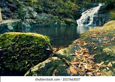 Beautiful Kondalilla Falls in Kondalilla National Park., Sunshine Coast.