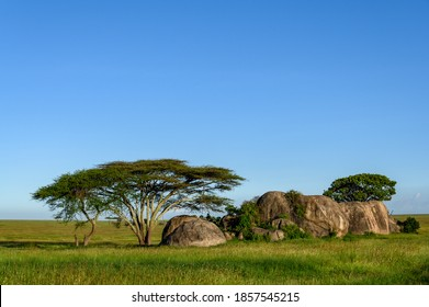 Beautiful Kopje with trees and shrubs in a summer grassy savanna landscape, Nomiri Plains, Serengeti National Park, Tanzania
