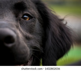 Saluki Images, Stock Photos & Vectors | Shutterstock