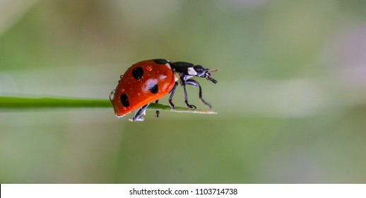 Beautiful ladibird / ladybug.