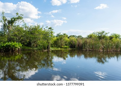 Beautiful lake background showing the natural plants and wildlife in South Florida near the Everglades.