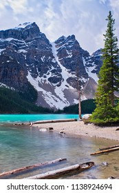 Beautiful Lake Moraine in all her glory. Mountains in the back, dead tree in the middle and branches in the foreground .