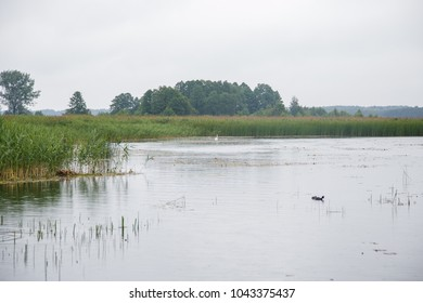 Beautiful lake with reed belt