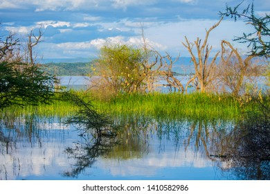 Beautiful lake shrub in lake baringo