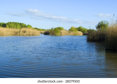 A beautiful lake surrounded by trees and plants