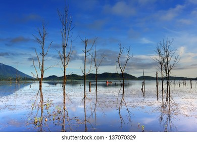 Beautiful lake view with fishing boat and tree death