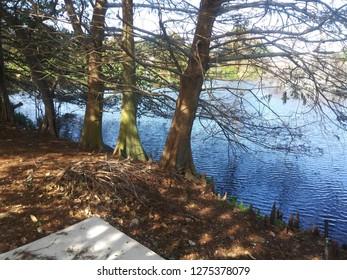 Beautiful lakeside trees