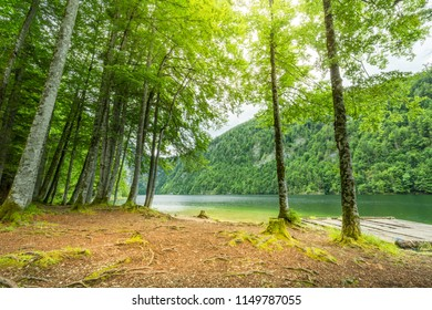 Beautiful lakeside and trees. Alpine landscape, pine trees and soft sunlight. Beautiful and inspirational nature background.
