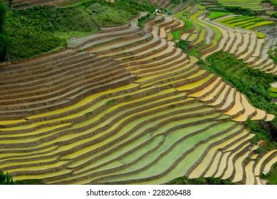 Beautiful landscape about terraced rice field in water season in Mucangchai, Vietnam