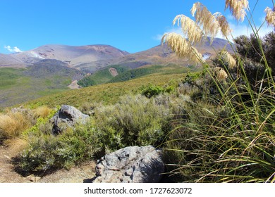 Beautiful Landscape along Tongariro Alpine Crossing in New Zealand with high mountains and green forests.