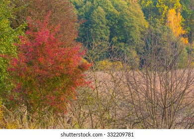 Beautiful landscape of autumnal forest near lake. Distant landscape photographed with tele lens. Autumnal colorful trees.