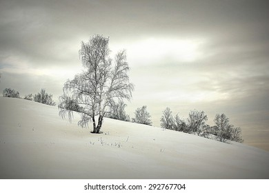 Beautiful landscape with birches on the hill, HDR image