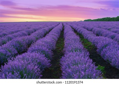 Beautiful landscape with blooming lavender field at summer sunset.